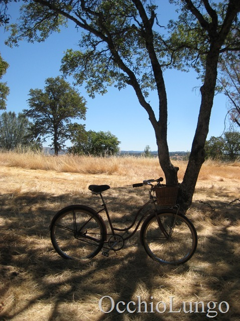 bike in the trees