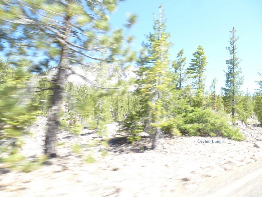trees a blur